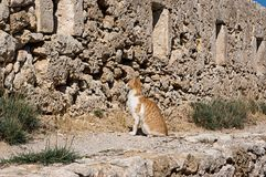 Gato de Creta en Fortezza de Rethymno, isla de Creta, Grecia foto de archivo