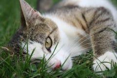 Gato de Cuty Imagens de Stock