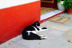 Gato de descanso, Skopelos, Grécia imagem de stock royalty free