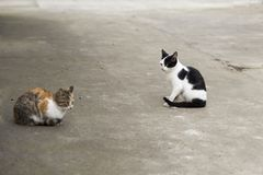 Gato de duas cores Fotografia de Stock Royalty Free