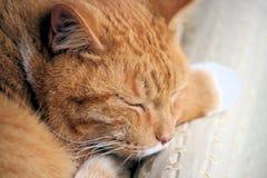 Gato de familia Fotografía de archivo libre de regalías