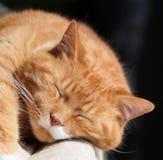 Gato de familia Imagen de archivo
