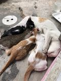 Gato de familia Foto de archivo libre de regalías