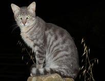 Gato de Ferral Fotografía de archivo