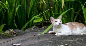 Gato de Ferral en un hotel turístico en Tailandia imágenes de archivo libres de regalías