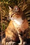 Gato de Finy Imagenes de archivo