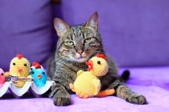 Gato de gato atigrado con un juguete Foto de archivo