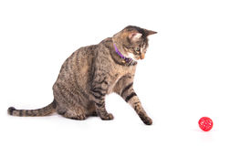 Gato de gato atigrado de Brown que juega con una bola roja Foto de archivo libre de regalías