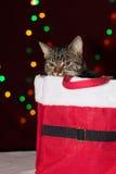 Gato de gato atigrado dentro de una caja del regalo de Navidad Fotografía de archivo libre de regalías