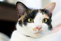 Gato de gato atigrado emocionado con algo Imagen de archivo libre de regalías