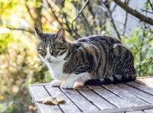 Gato de gato atigrado en el jardín Imagen de archivo libre de regalías