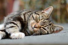 Gato de gato atigrado en el tejado de vertiente Imagen de archivo