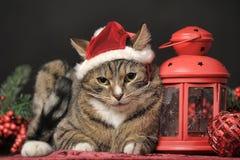 Gato de gato atigrado en un sombrero de la Navidad Foto de archivo