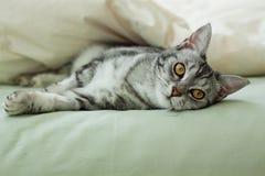 Gato de gato atigrado gris joven que descansa sobre cama Imagen de archivo