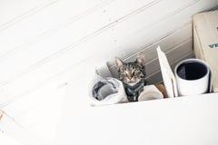 Gato de gato atigrado joven curioso que miente en desván sucio Mirada abajo A baja Imágenes de archivo libres de regalías
