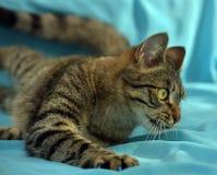 Gato de gato atigrado joven hermoso imagen de archivo libre de regalías