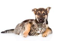 Gato de gato atigrado mezclado del abarcamiento del perro de la raza Aislado en el backgroun blanco Fotografía de archivo libre de regalías