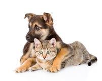Gato de gato atigrado mezclado del abarcamiento del perro de la raza Aislado en el backgroun blanco Imagenes de archivo