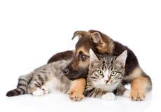 Gato de gato atigrado mezclado del abarcamiento del perro de la raza Aislado en el backgroun blanco Foto de archivo