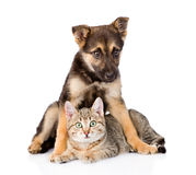 Gato de gato atigrado mezclado del abarcamiento del perro de la raza Aislado en el fondo blanco Imagen de archivo libre de regalías