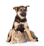Gato de gato atigrado mezclado del abarcamiento del perro de la raza Aislado en el fondo blanco Fotografía de archivo libre de regalías