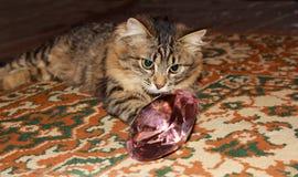 Gato de gato atigrado pensativo Imagen de archivo