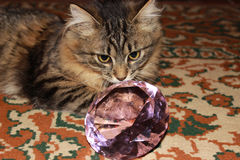 Gato de gato atigrado pensativo fotografía de archivo