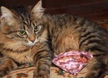 Gato de gato atigrado pensativo foto de archivo