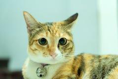 Gato de gato atigrado que busca algo Fotos de archivo
