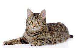Gato de gato atigrado que miente y que mira la cámara Aislado en blanco Foto de archivo