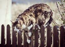 Gato de gato atigrado que salta abajo de una cerca Imagenes de archivo