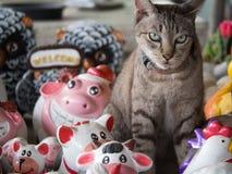 Gato de gato atigrado que se sienta con las muñecas que adornan el animal Imágenes de archivo libres de regalías