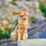 Gato de gato atigrado rojo adorable en una calle Imágenes de archivo libres de regalías