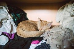 Gato de gato malhado alaranjado que dorme na roupa dentro de um armário Fotografia de Stock Royalty Free