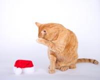 Gato de gato malhado alaranjado que senta-se ao lado da sagacidade escondendo da cara do chapéu pequeno de Santa Imagem de Stock