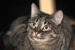 Gato de gato malhado bonito Fotografia de Stock