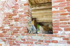 gato de gato malhado em uma janela em uma parede de tijolo Fotografia de Stock Royalty Free