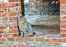gato de gato malhado em uma janela em uma parede de tijolo Imagem de Stock Royalty Free