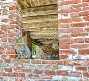 gato de gato malhado em uma janela em uma parede de tijolo Fotos de Stock