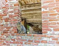 gato de gato malhado em uma janela em uma parede de tijolo Foto de Stock