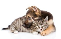 Gato de gato malhado misturado do abraço do cão da raça Isolado no fundo branco Imagens de Stock