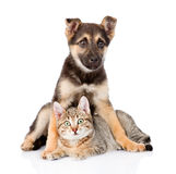Gato de gato malhado misturado do abraço do cão da raça Isolado no fundo branco imagens de stock royalty free