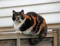 Gato de gato malhado na cerca Imagens de Stock Royalty Free