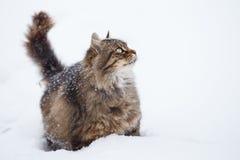 Gato de gato malhado na neve fotos de stock