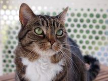 Gato de gato malhado no balcão imagens de stock royalty free