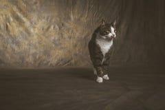 Gato de gato malhado novo bonito com a caixa branca contra o fundo escuro da tela Fotografia de Stock