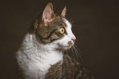 Gato de gato malhado novo bonito com a caixa branca contra o fundo escuro da tela Imagem de Stock Royalty Free