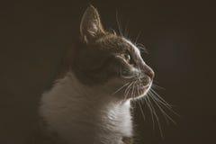 Gato de gato malhado novo bonito com a caixa branca contra o fundo escuro da tela Fotos de Stock Royalty Free