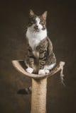 Gato de gato malhado novo bonito com a caixa branca que senta-se em riscar o cargo contra o fundo escuro da tela Imagens de Stock
