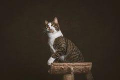 Gato de gato malhado novo brincalhão alerta com a caixa branca que senta-se em riscar o cargo contra o fundo escuro da tela Imagens de Stock Royalty Free